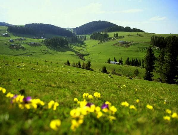 Dereli Aymaç Tabiat Parkı İlan Edildi