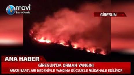 Giresun'da Dört Günde 63 Yangının Sebebi Ne?